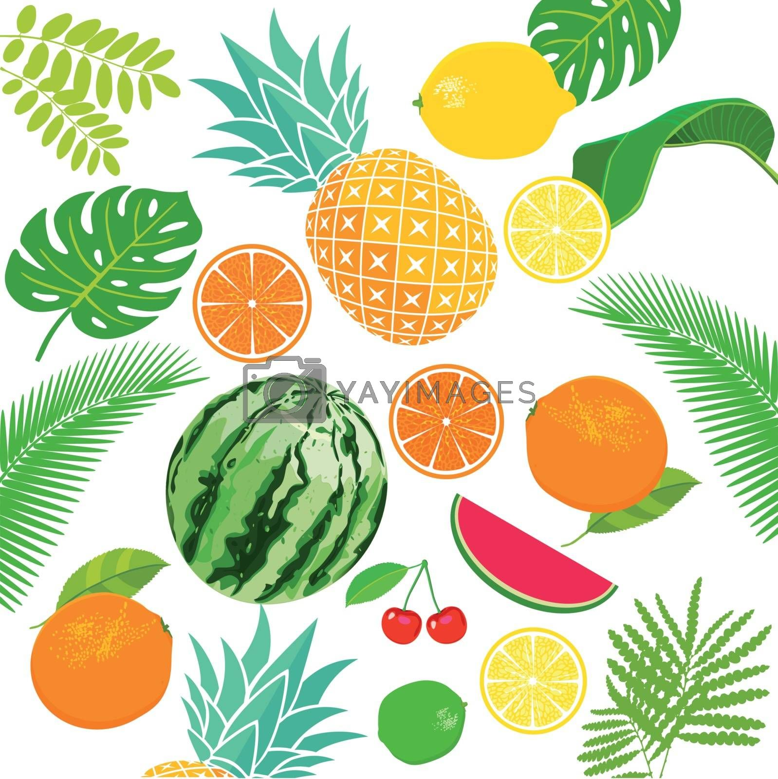 Various fresh fruits illustration