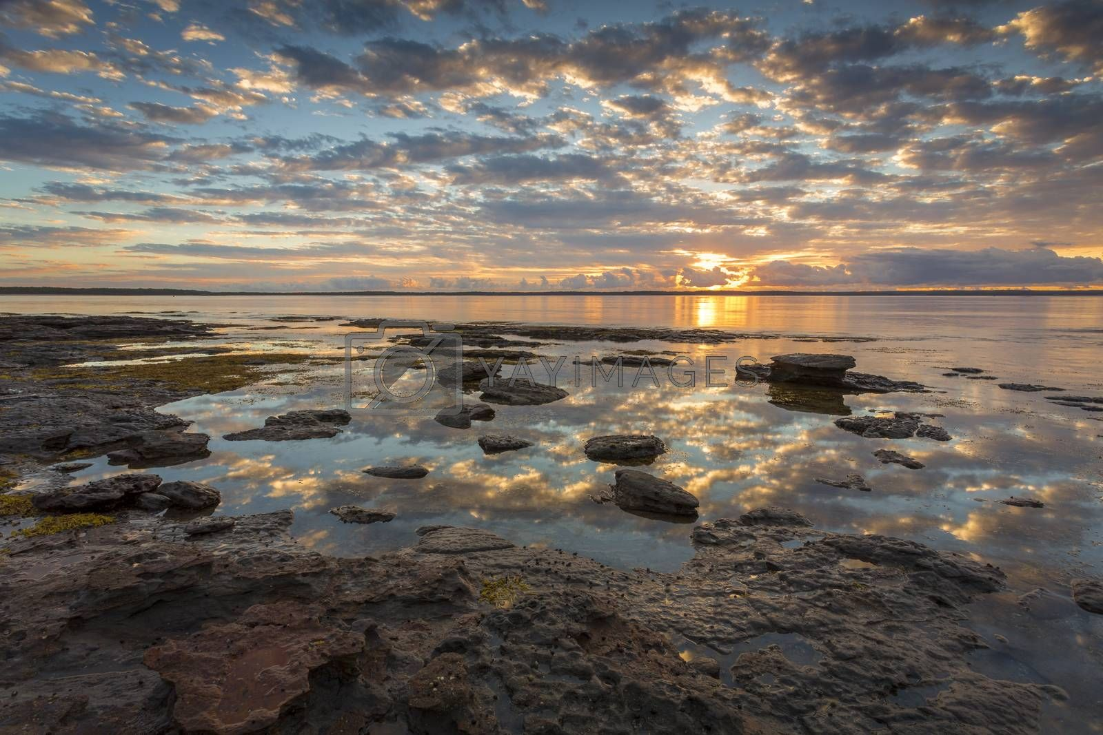 Beautiful sunrise reflecting across the bay at low tide.  Location  Callala Bay, part of Jervis Bay, Australia