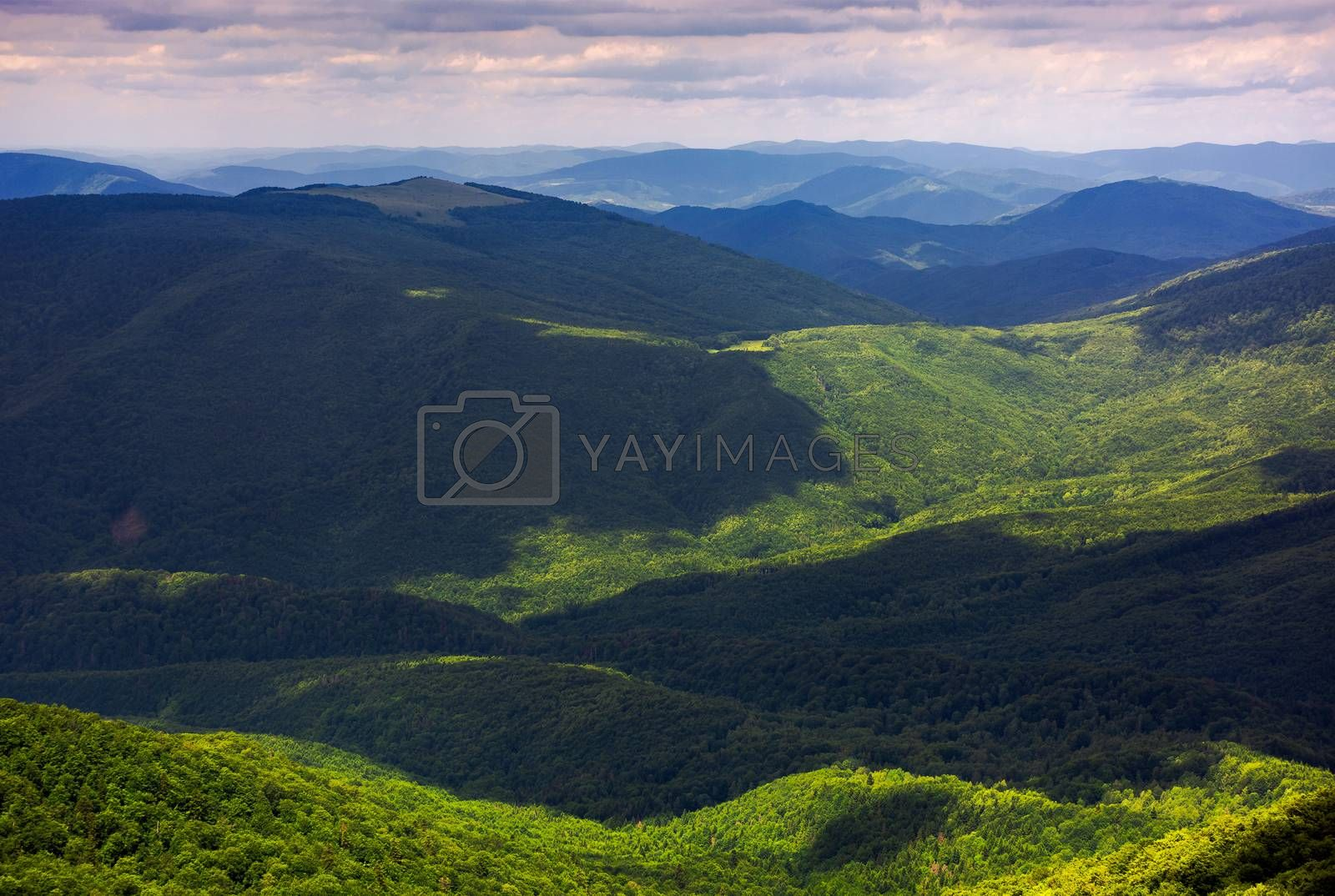 forested rolling hills of Carpathian mountains. gorgeous nature scenery on a cloudy summer day