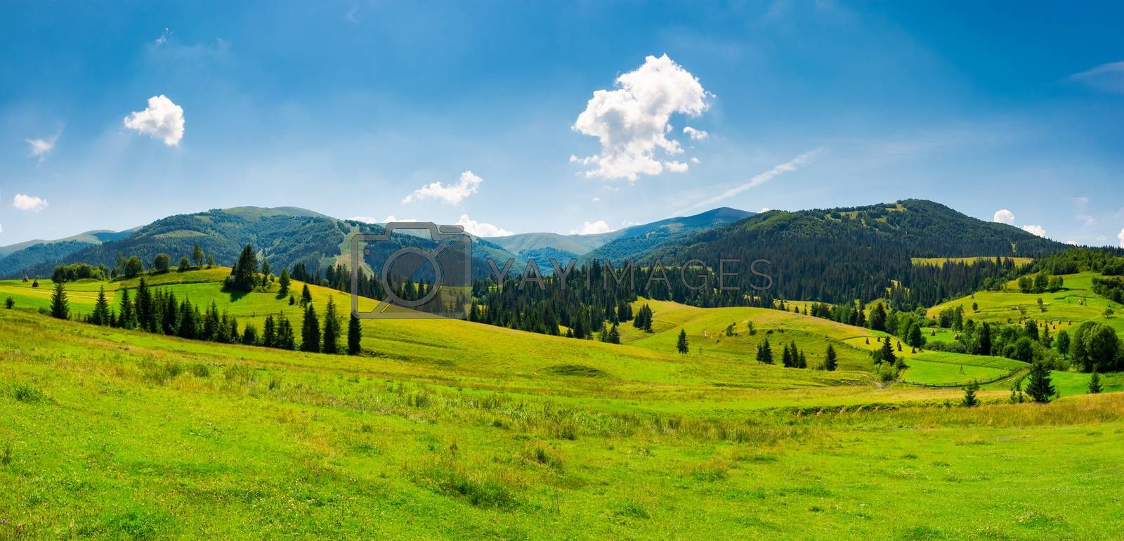 panorama of mountainous landscape in summer. spruce forest on a grassy hills in the valley of Carpathian mountain. beautiful view of Borzhava mountain ridge with Velykyi verkh peak in the distance