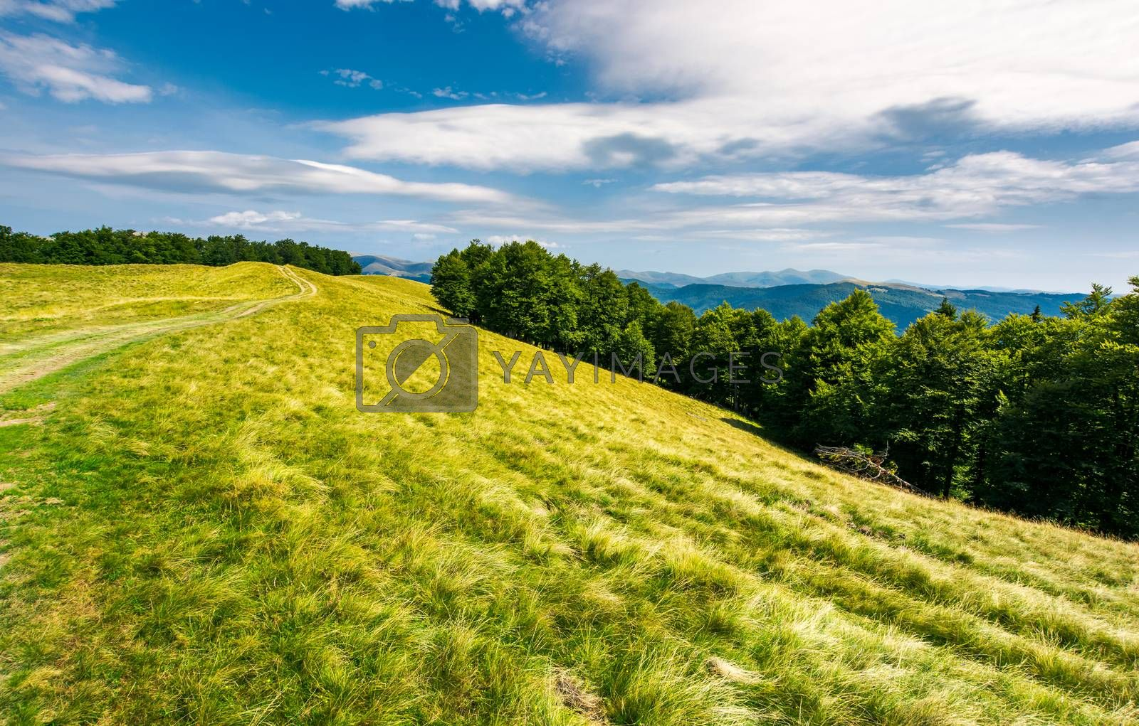 mountain road uphill in to the beech forest. Svydovets mountain ridge in the distance. stunning landscape of Carpathian mountains, Ukraine