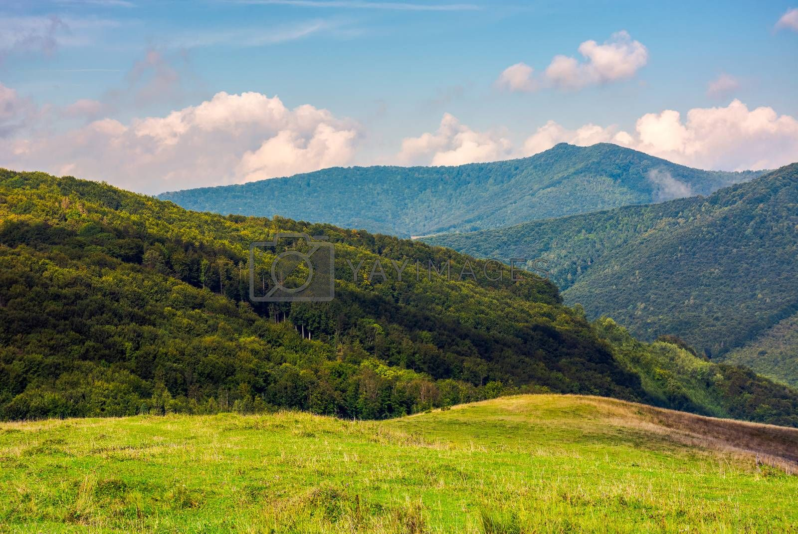 meadow on a mountain slope by Pellinni