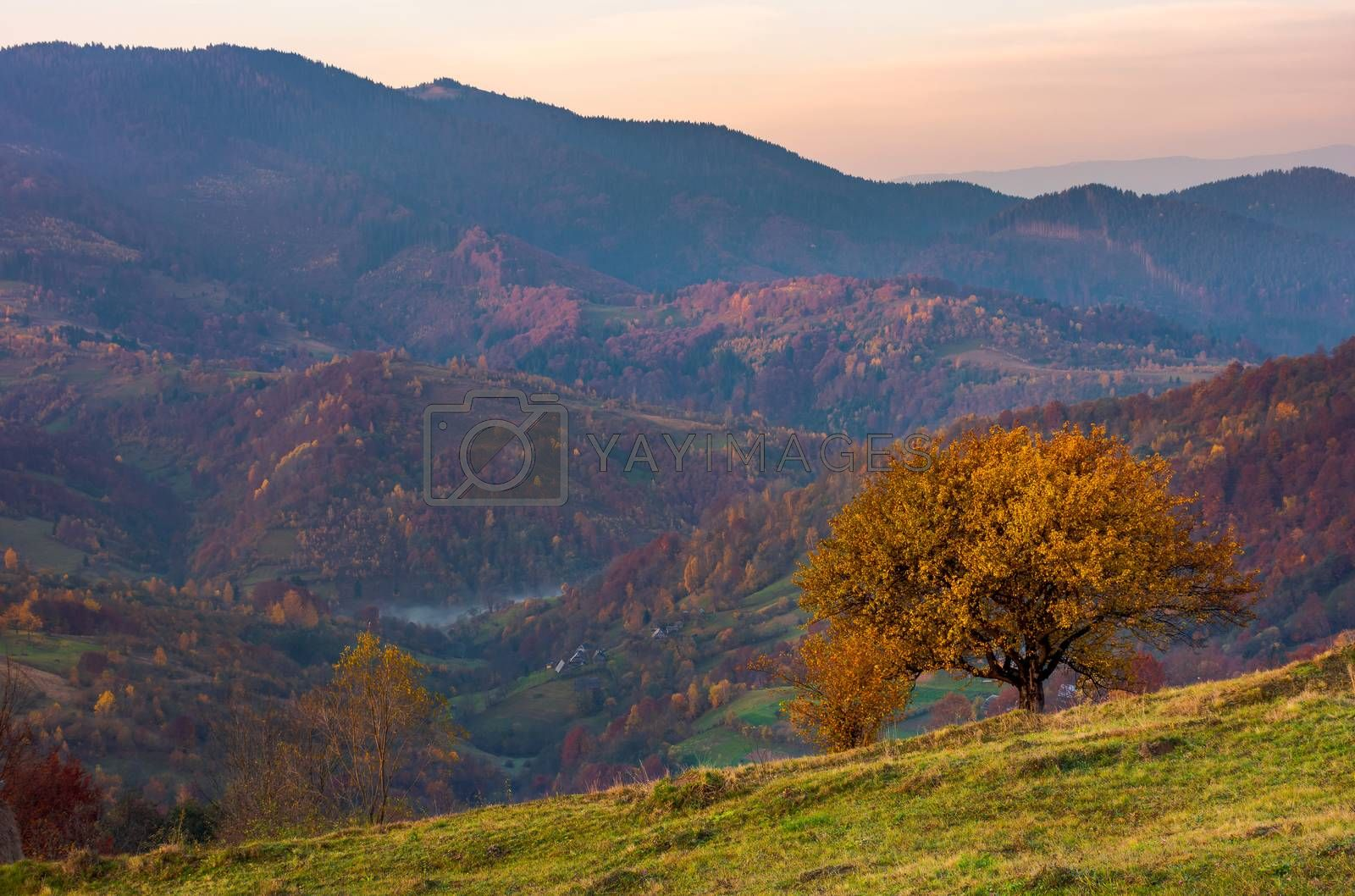 tree on a grassy hillside in autumn mountains. beautiful scenery at dawn. small village down the hill in valley