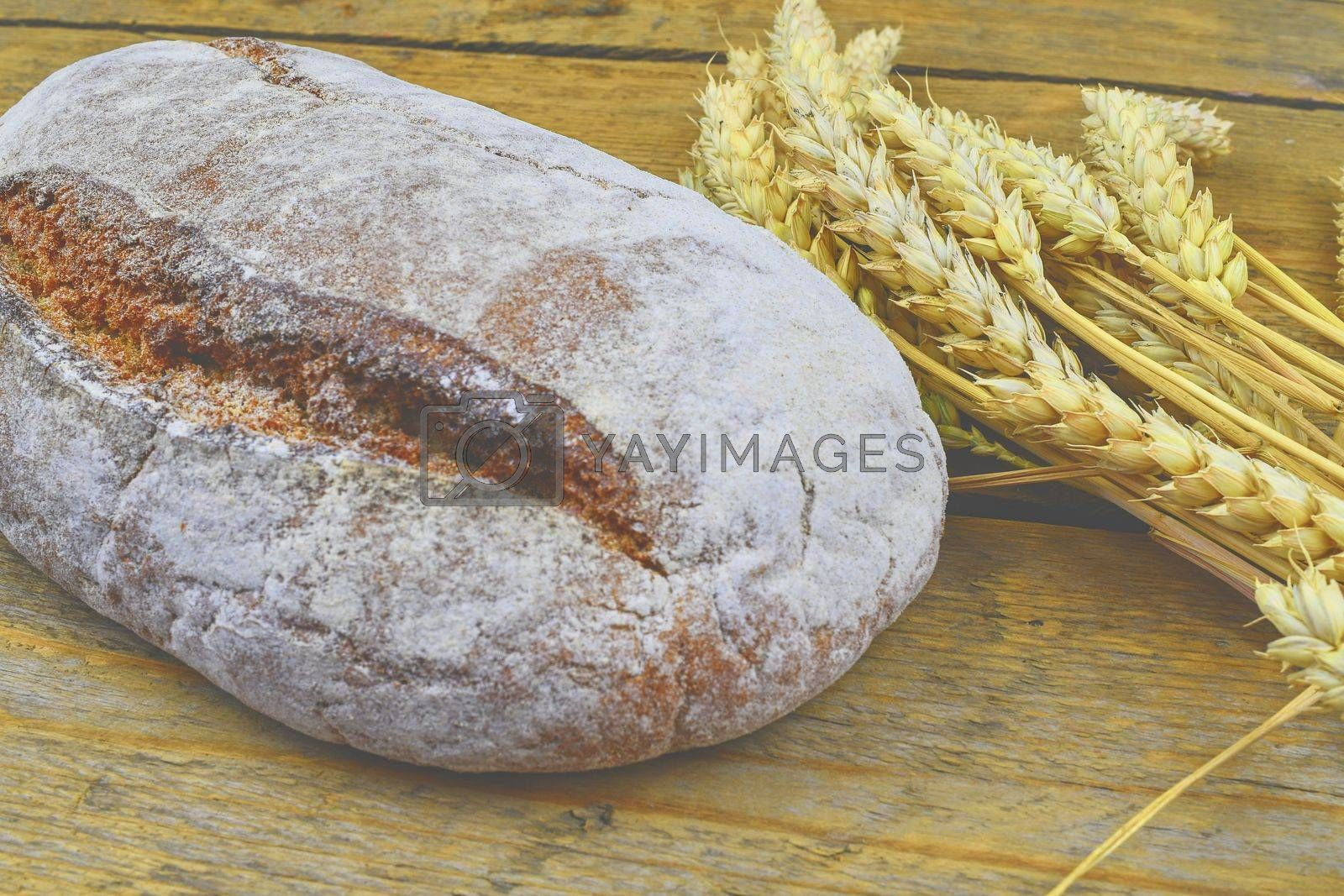 Loaf of bread and ears of grain on wood background. Rustic and rural concept. Close up.
