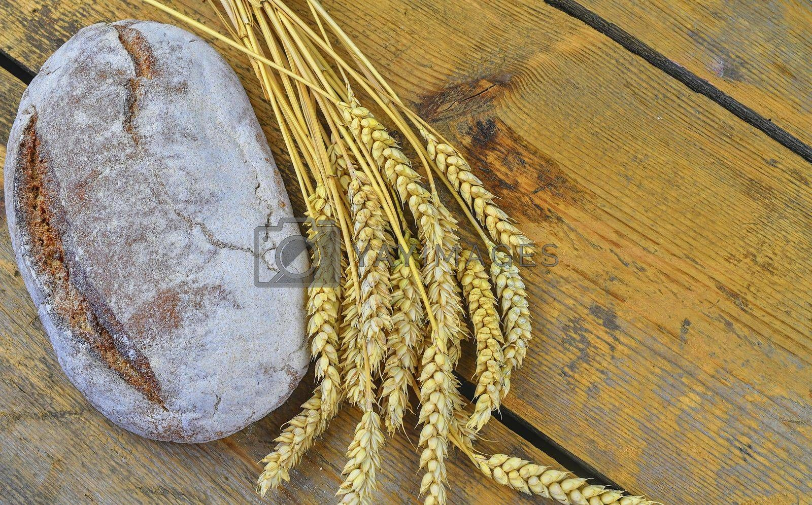 Loaf of bread and ears of grain on wood background. Rustic and rural concept. Copy space.