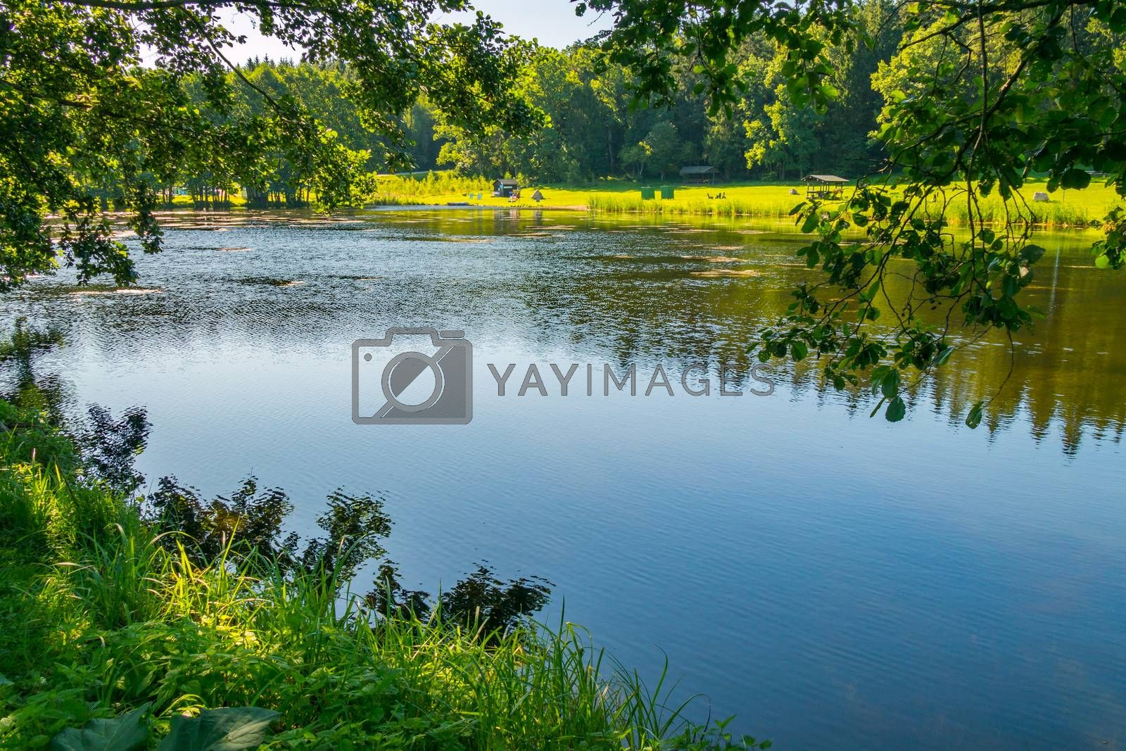 beautiful lake with grassy shores in the park. place for recreation and fishing