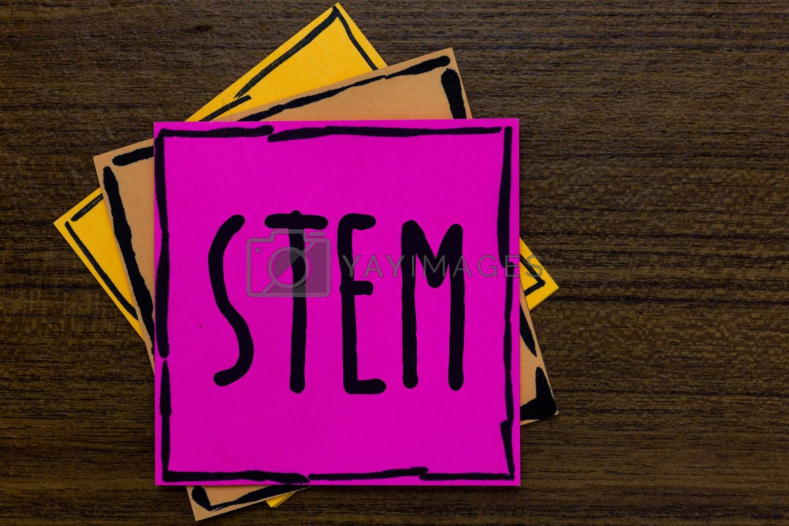 Writing note showing Stem. Business photo showcasing Development destruction of human embryos for science and research Three art small paper two yellow one pink wood brown lite grey shadow
