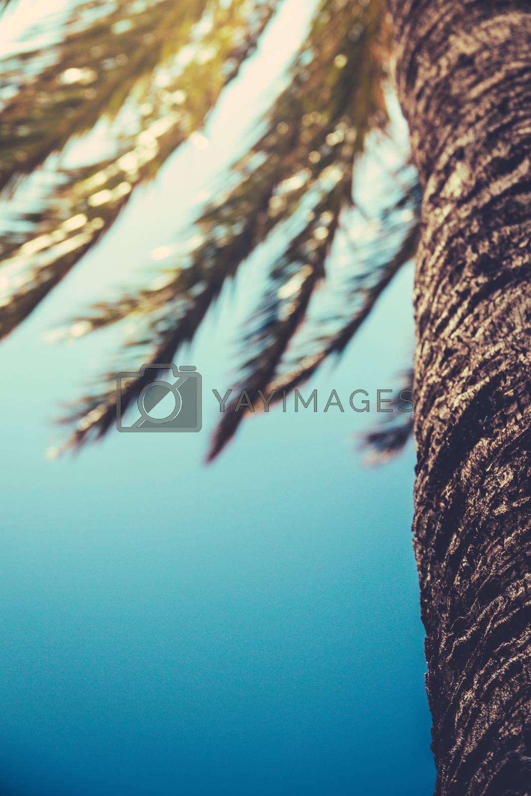 A Retro Filtered Palm Tree In Hawaii With Copy Space