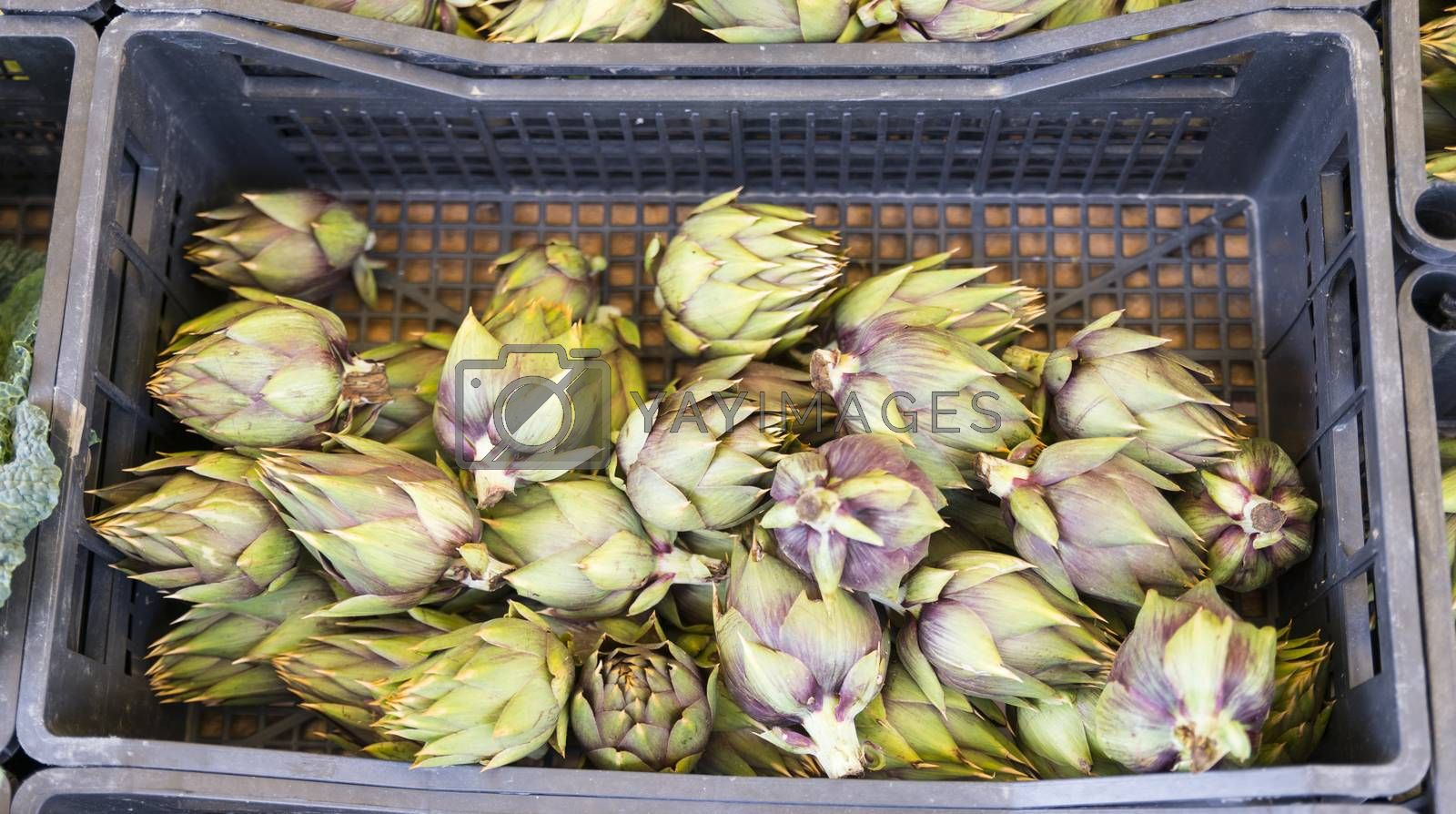 artichokes for sale on the market by compuinfoto
