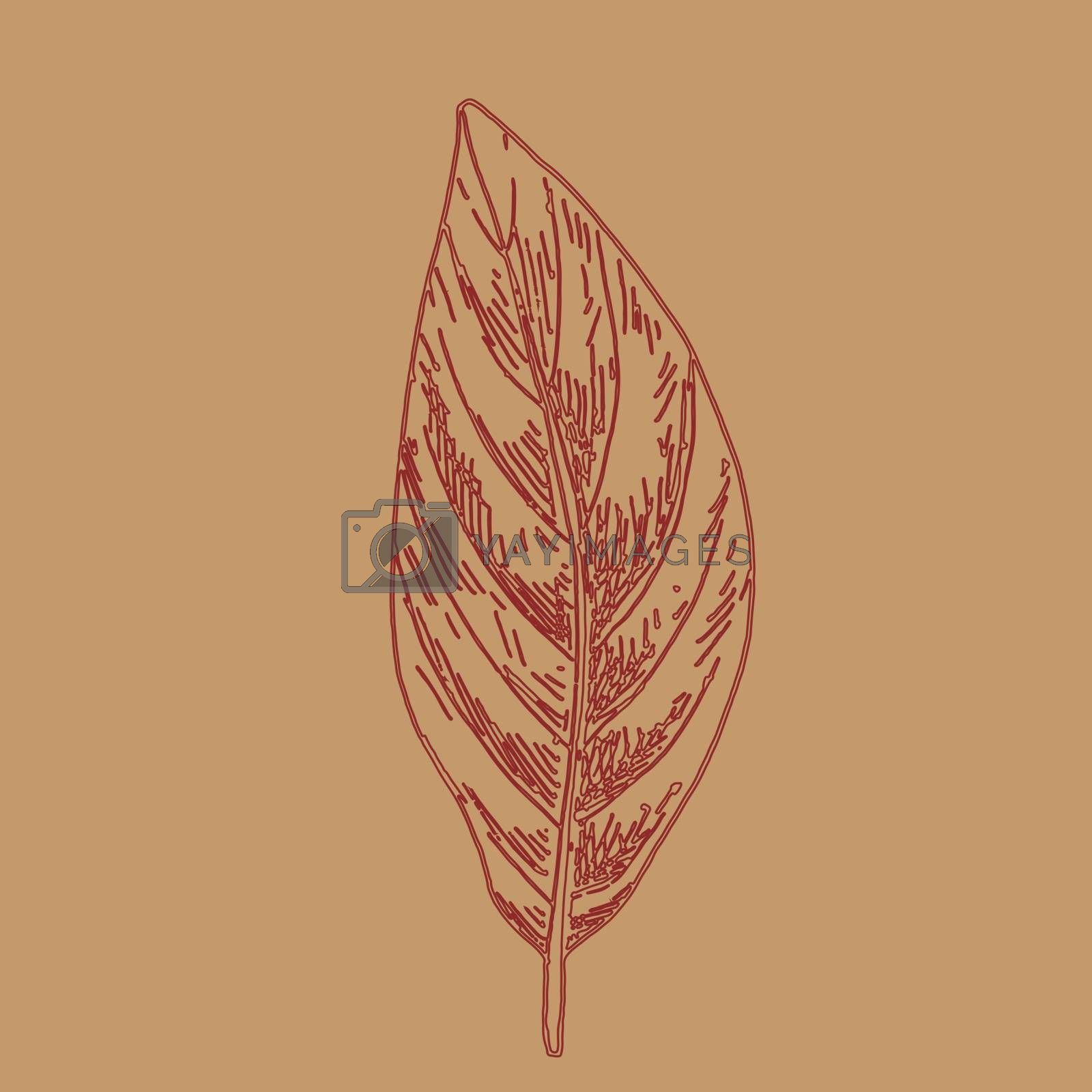 Hand drawn leaf outline. Autumn leaf in line art style isolated on brown background