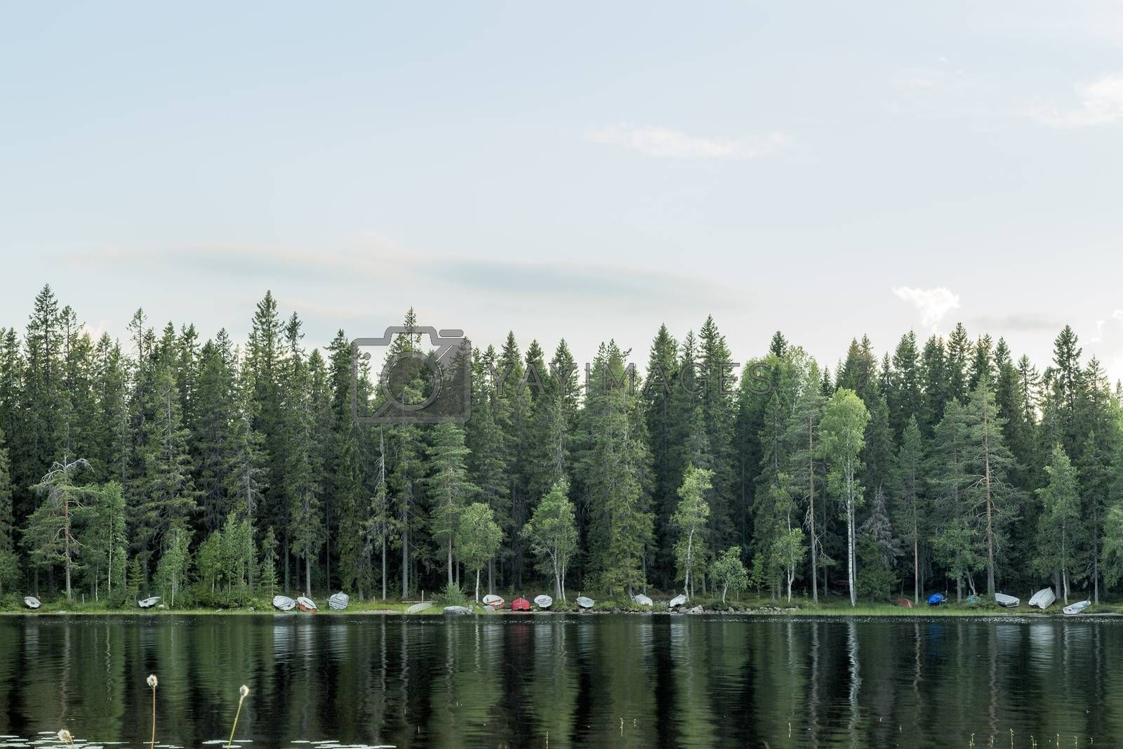 Rowboats by Lake with forest and sky.