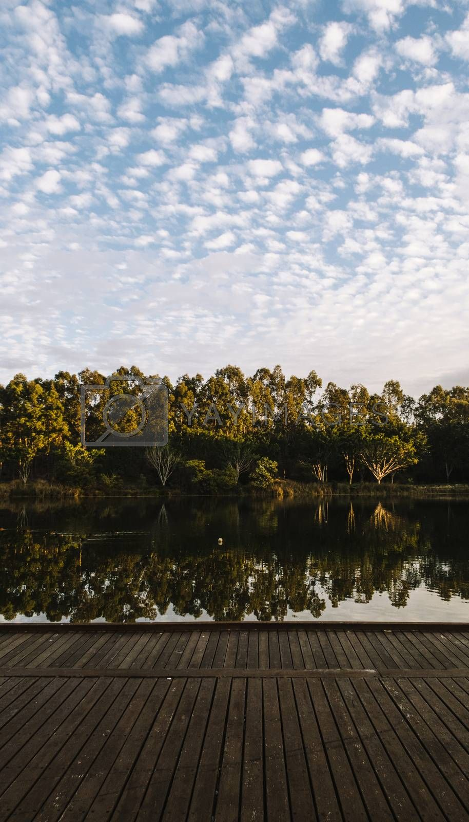 Beautiful lake in Springfield Lakes, Ipswich City, Queensland in the morning.