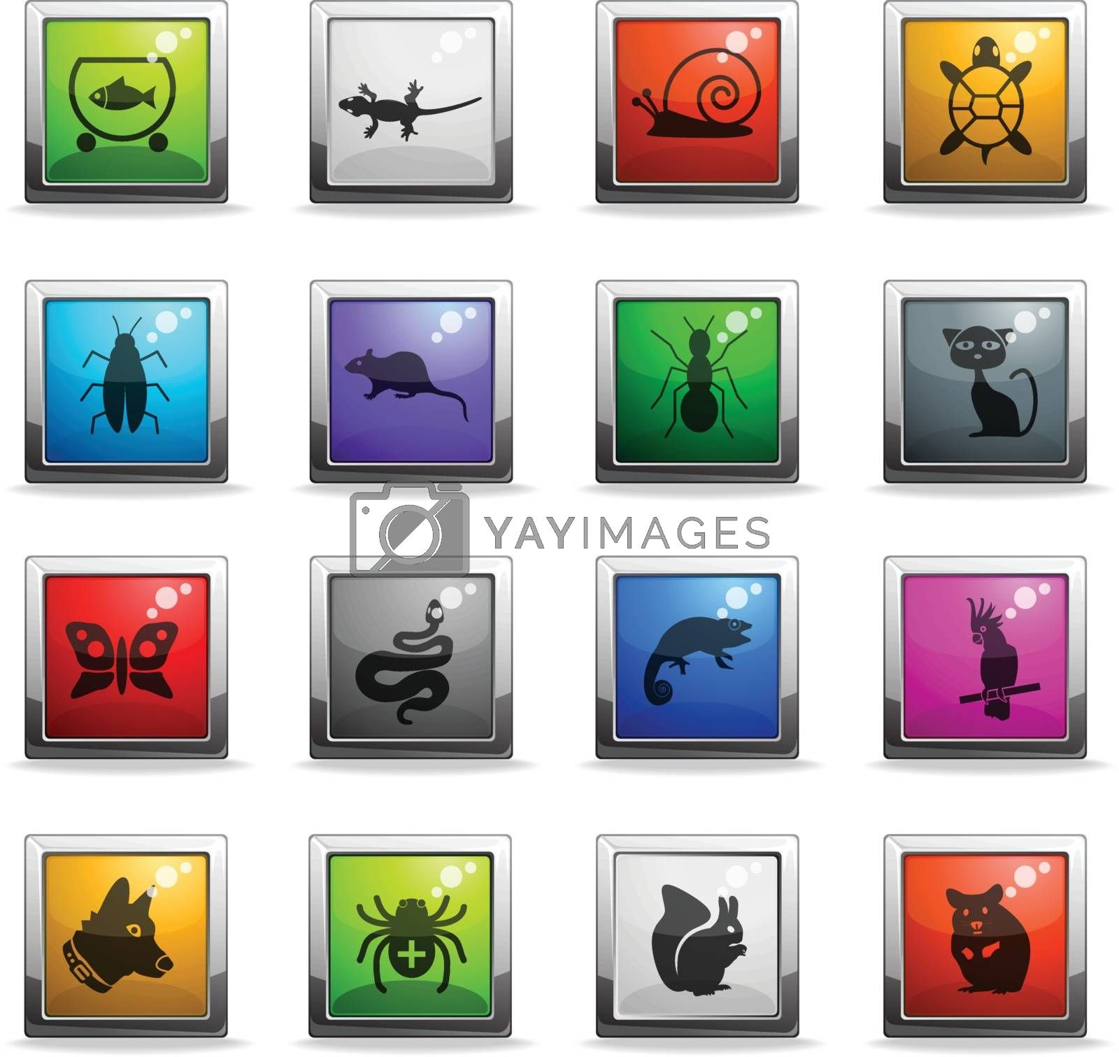 pets web icons in square colored buttons for user interface design