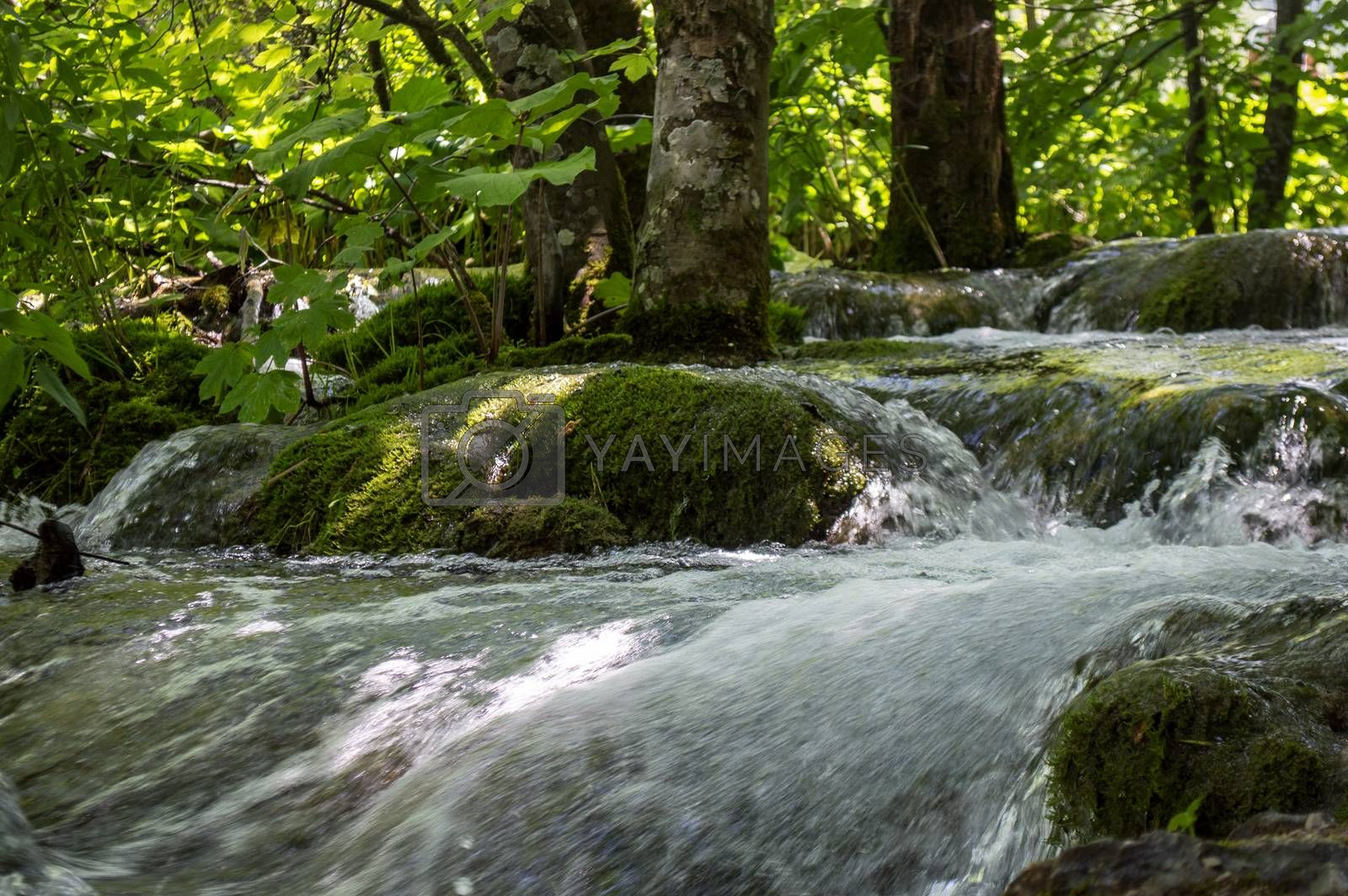 Small flowing lake in Plitvice with trees in summertime.