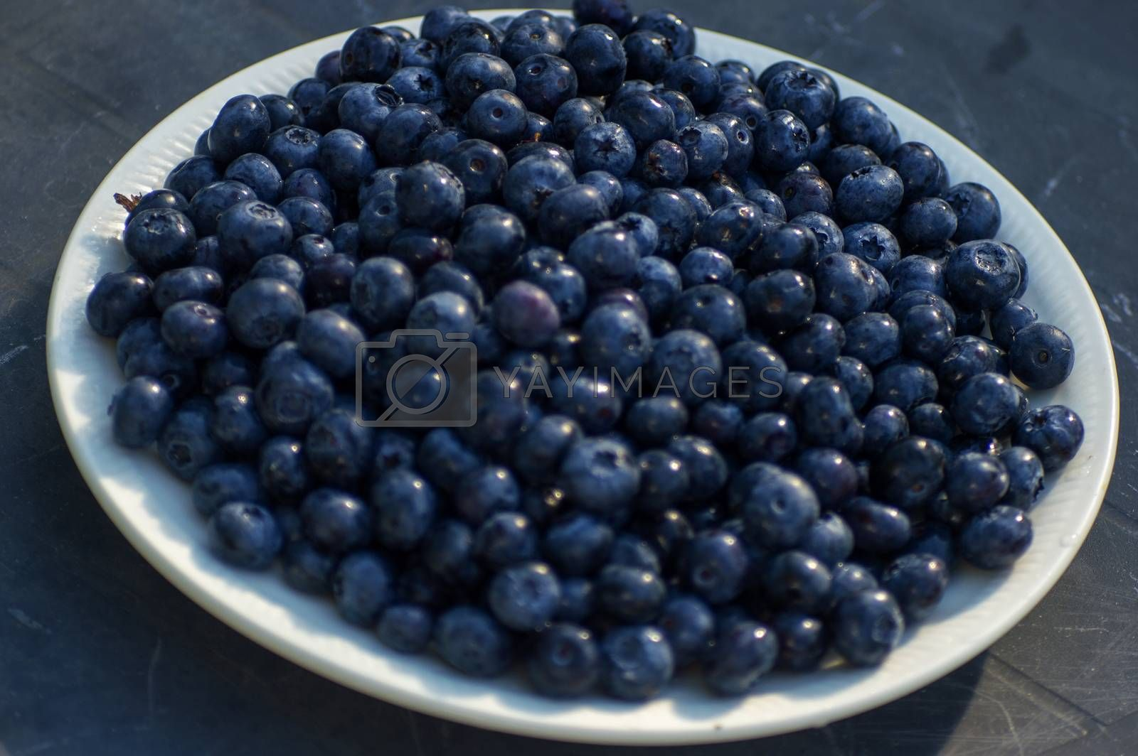 Blue blueberries closeup on plate in summer.