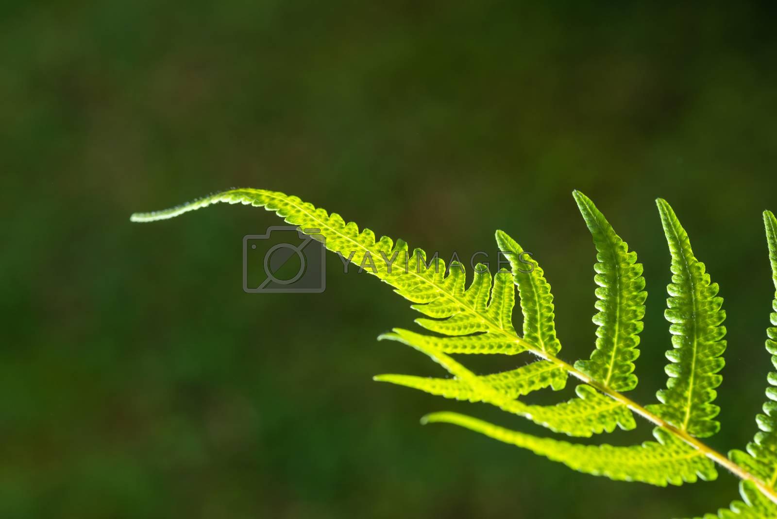 Closeup shot of backlit fern leaf