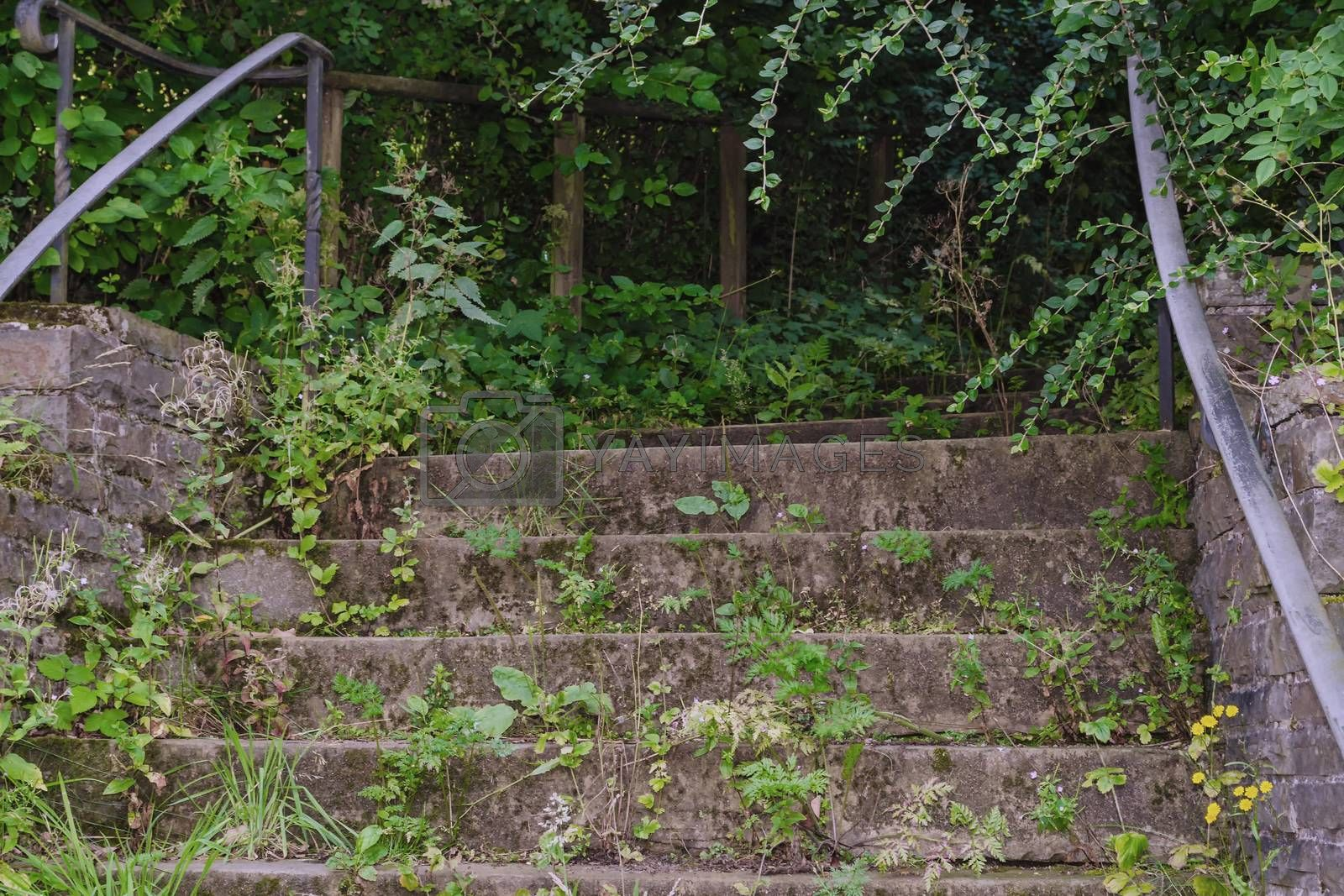 An old stone stair with railing surrounded with vegetation