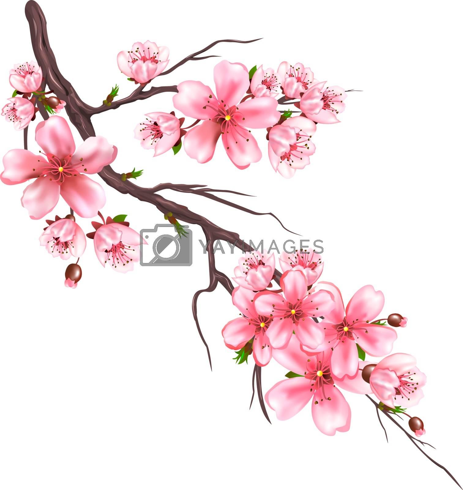 Flowering sakura branch by liolle