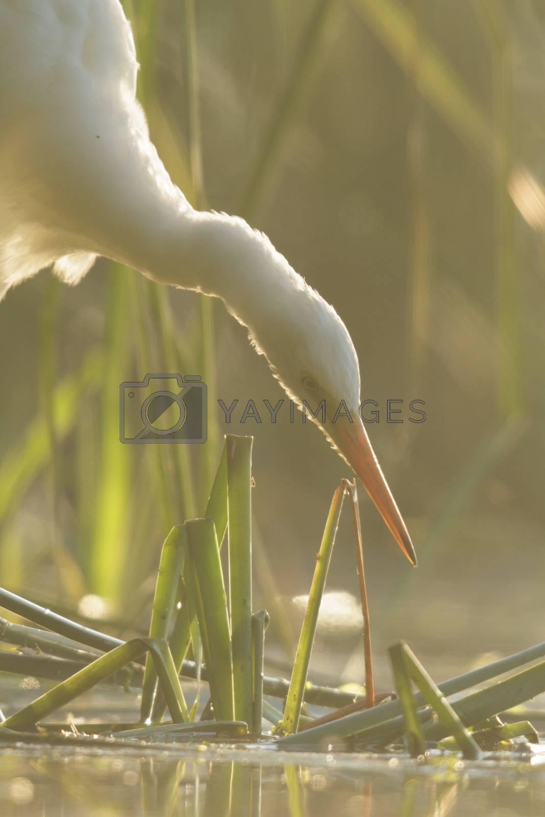 wild bird in natural habitat, nature series