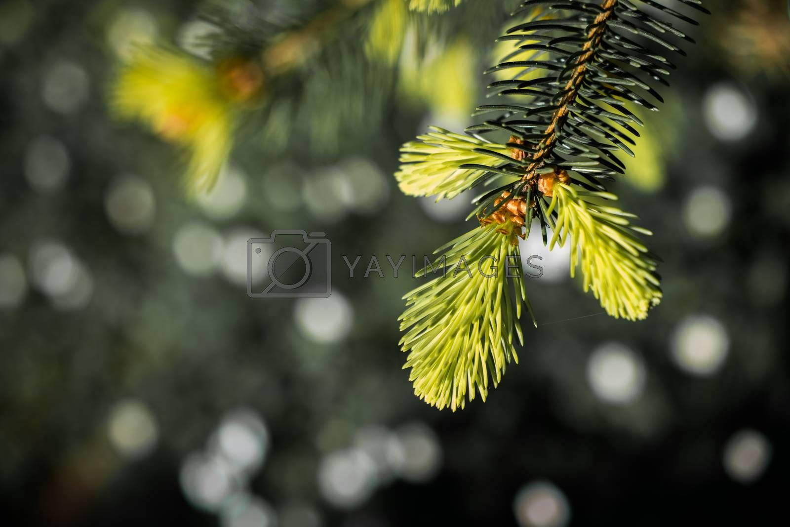 Green tree leaves as a background