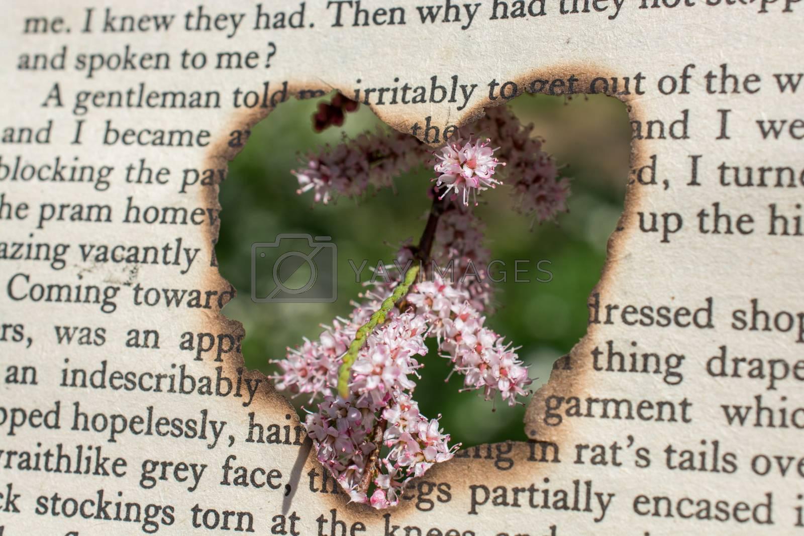 Flowers seen through heart shape cut out of cardboard