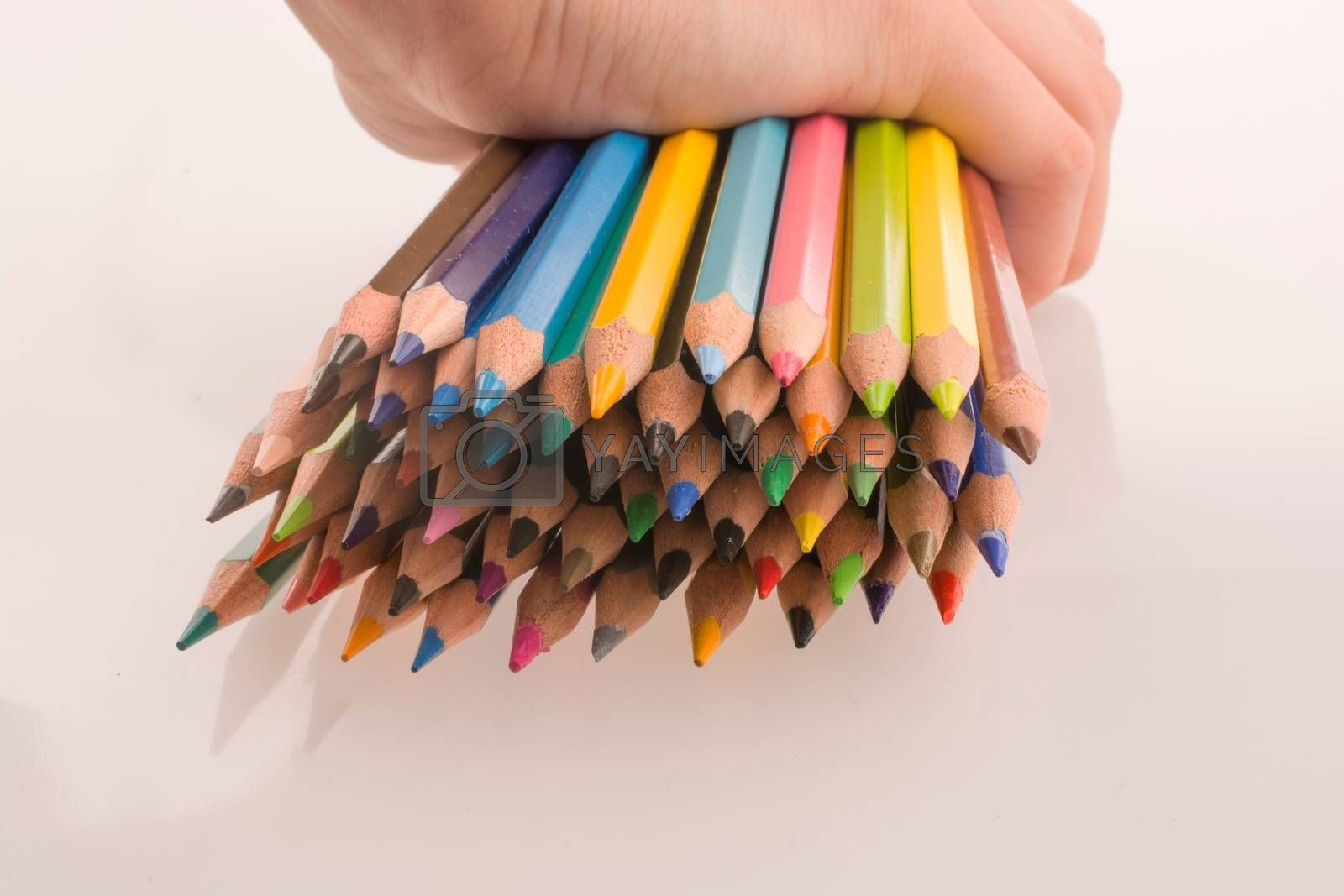 Hand holding Color pencils on a white background