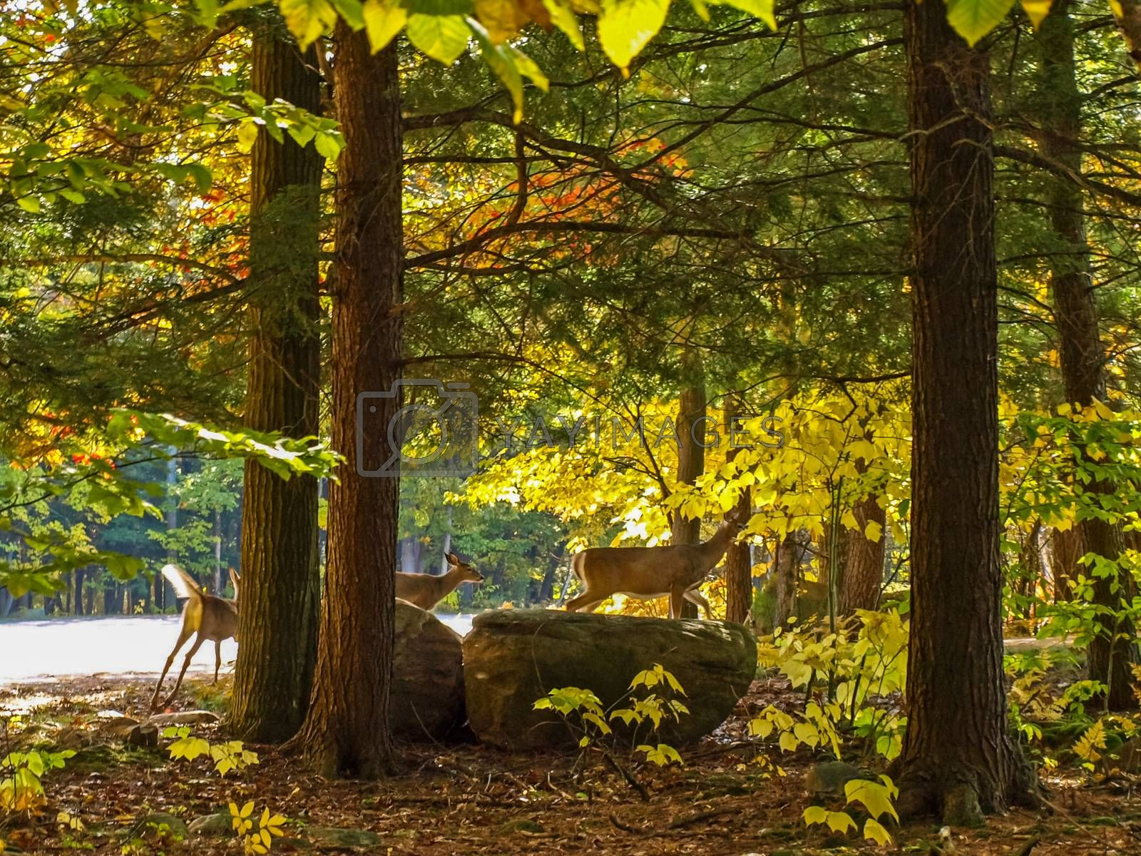 Forest deer in the autumn forest, animals near Lake Huron. a beautiful autumn landscape.