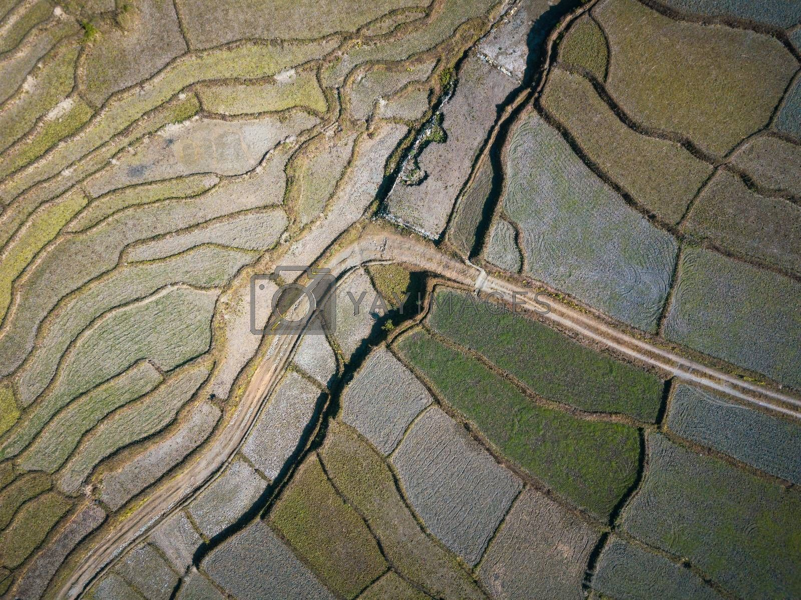 Aerial view of a dirt road accross paddy fields in Nepal. Winter season.