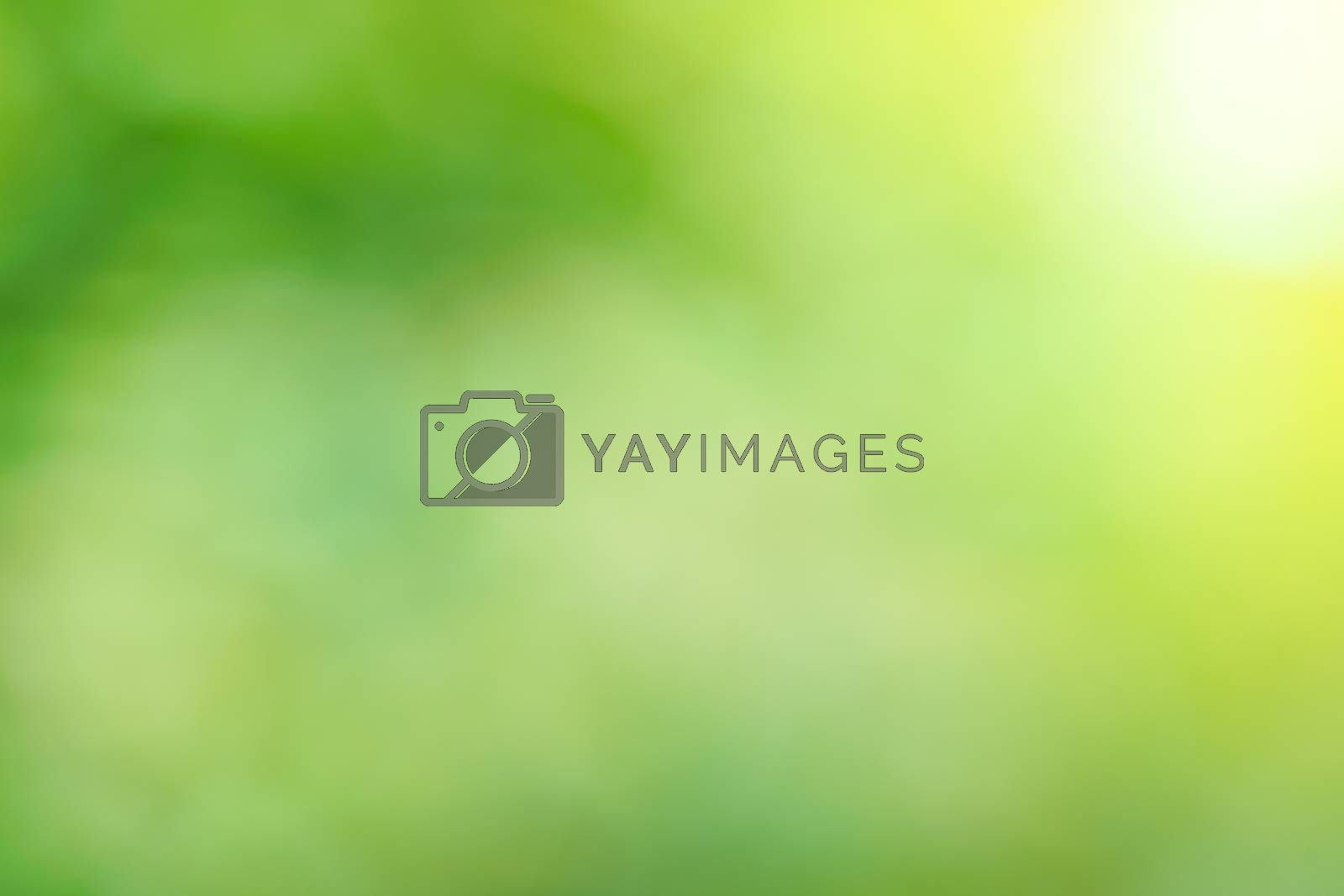 Royalty free image of abstract green bokeh background by antpkr