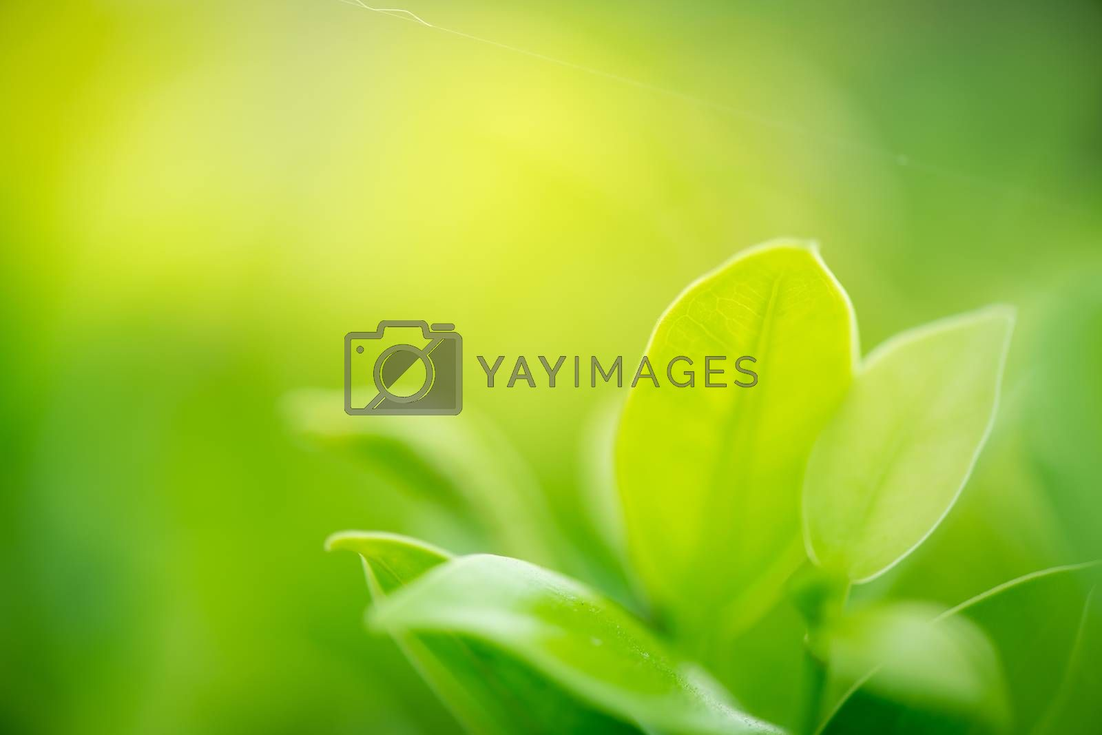Royalty free image of closeup green leaf on green nature background by antpkr