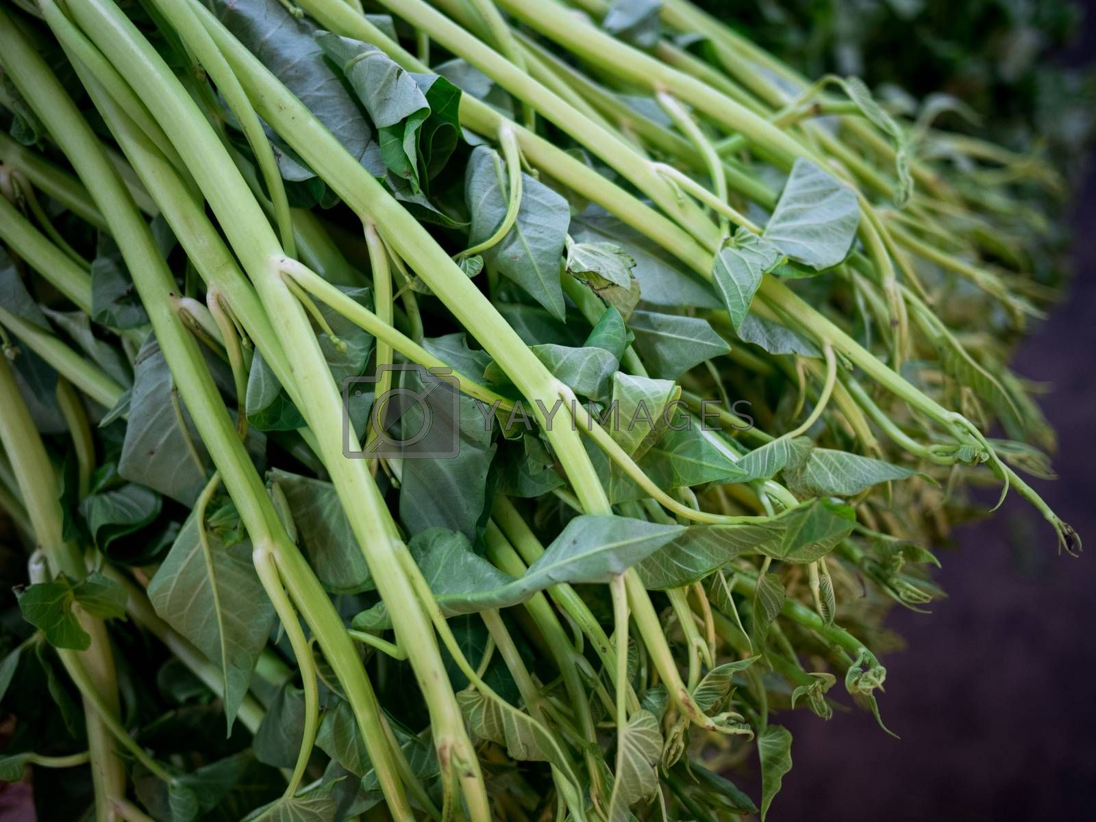 Royalty free image of heap of morning glory on fresh market by antpkr