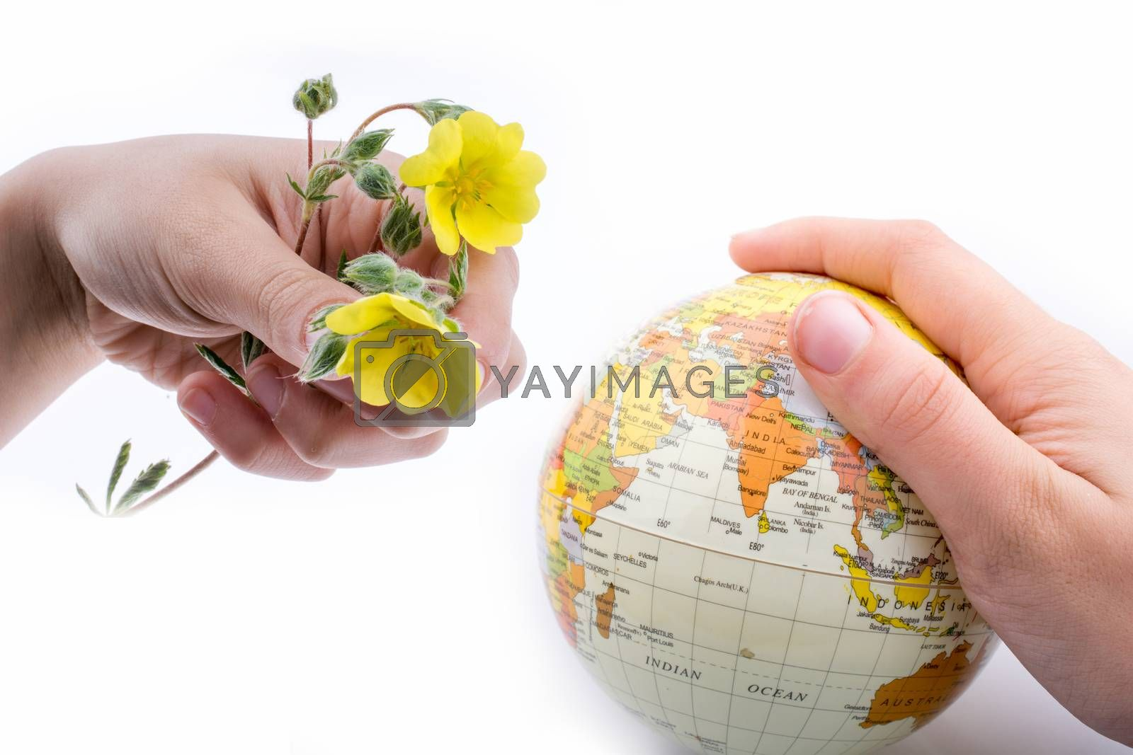 Hand holding a little model  globe and yellow flowers