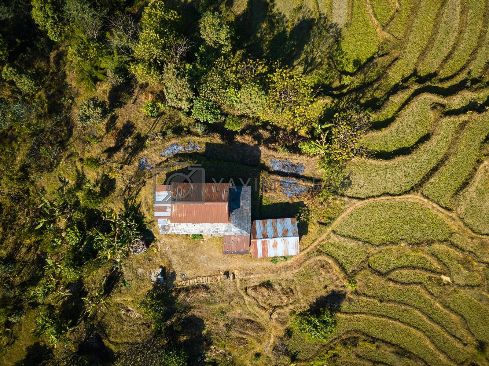 Aerial view of a house among paddy fields and trees in Nepal