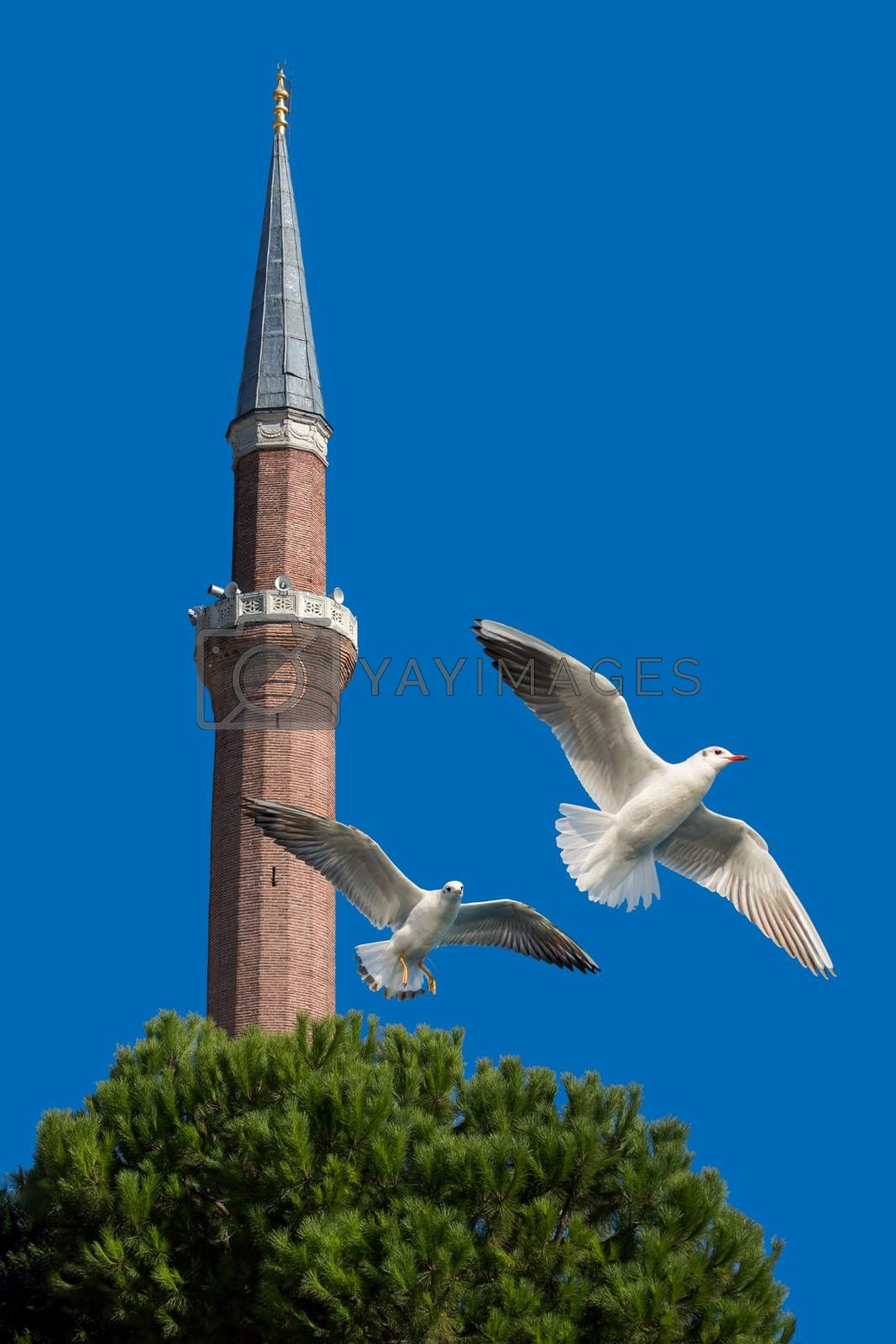 Minaret and pair of seagulls