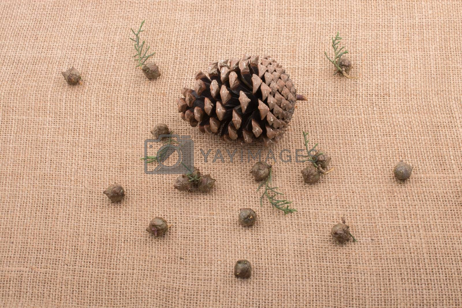 Plant pods, capsules and pine cones on canvas background