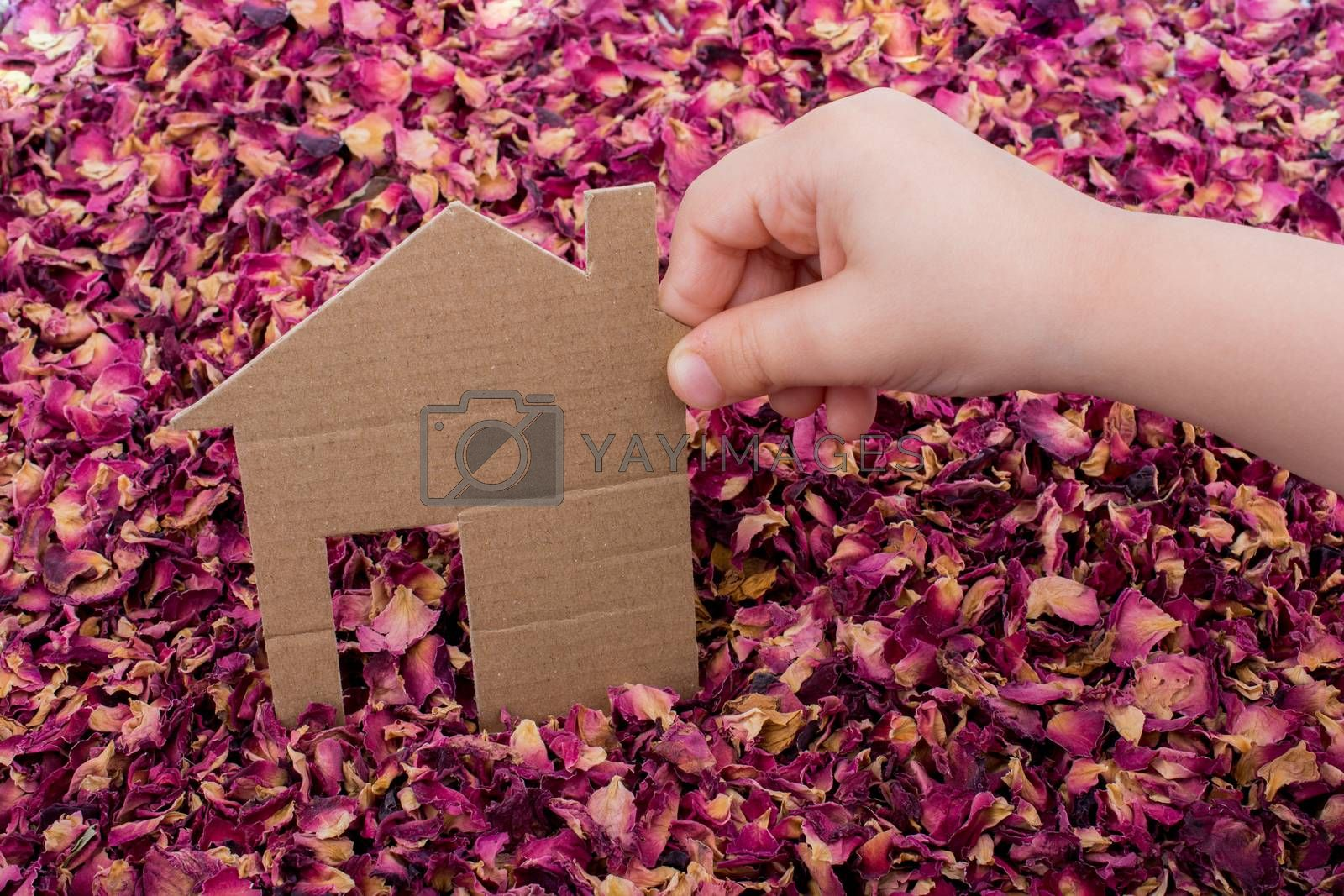 Hand holding Paper house on dry rose petals