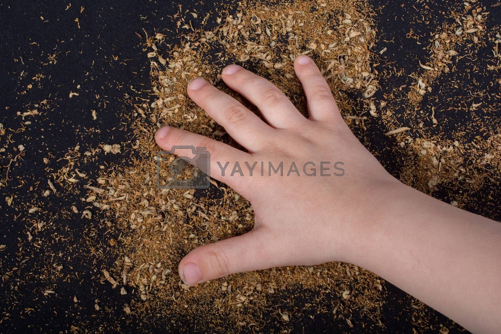 Toddlers hand on tobacco on black ground
