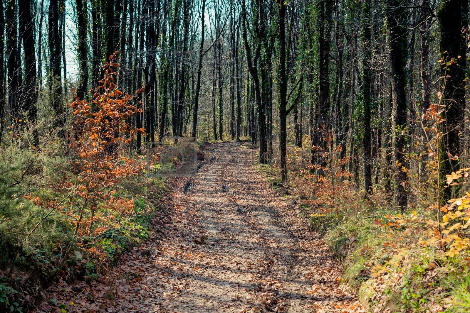 Hiking path in beautiful woods landscape in forest