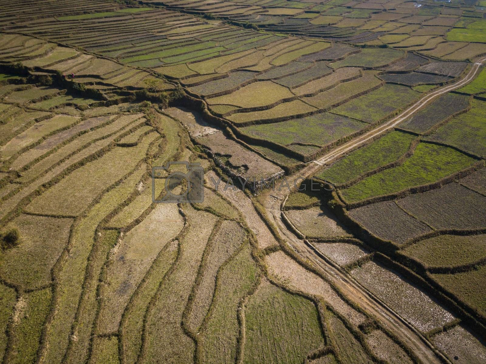 Aerial view of paddy fields in winter, Nepal