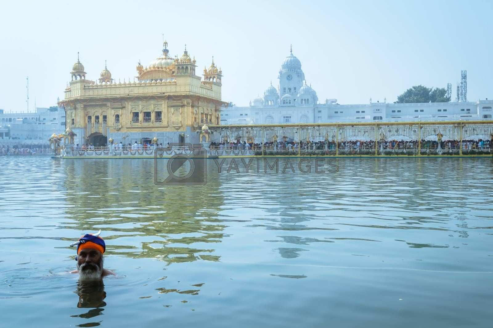 "Amritsar, Punjab, India, Asia - MAY 9: Punjabi Sikh pilgrim devotee ""Nihang Warrior"" taking bath and prayer in pond and meditating in front of Golden Temple (""Harmandir Sahib Darbar Gurudwara"")"