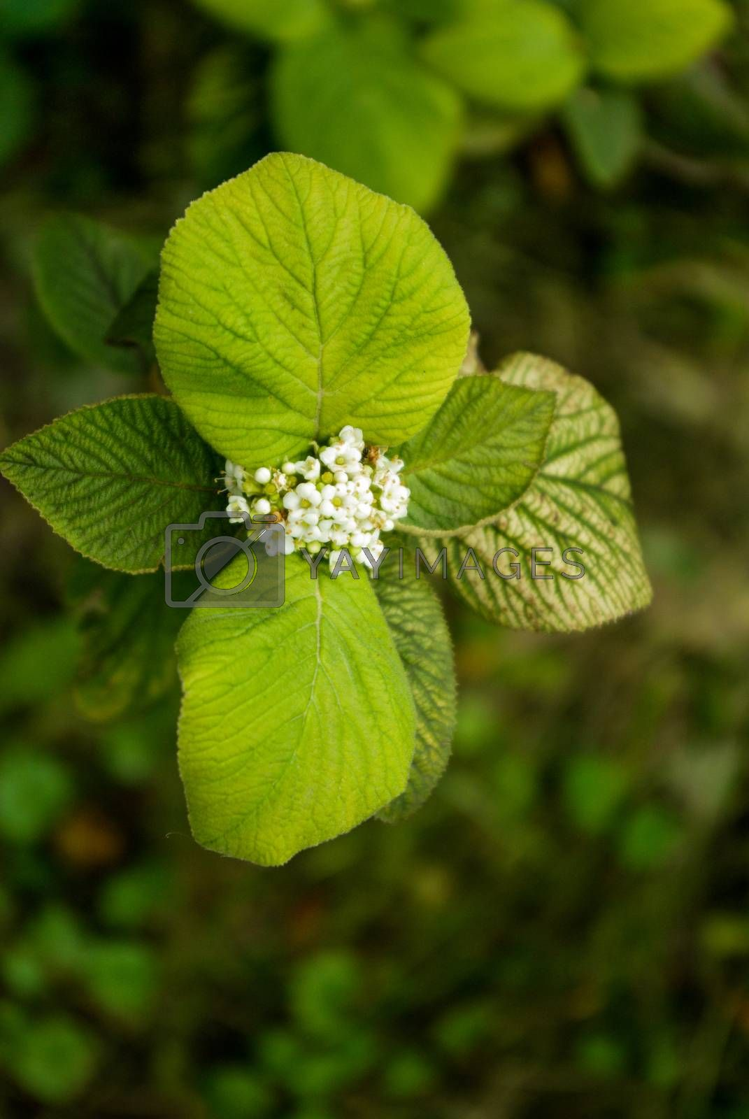 Green leaves of the spring season
