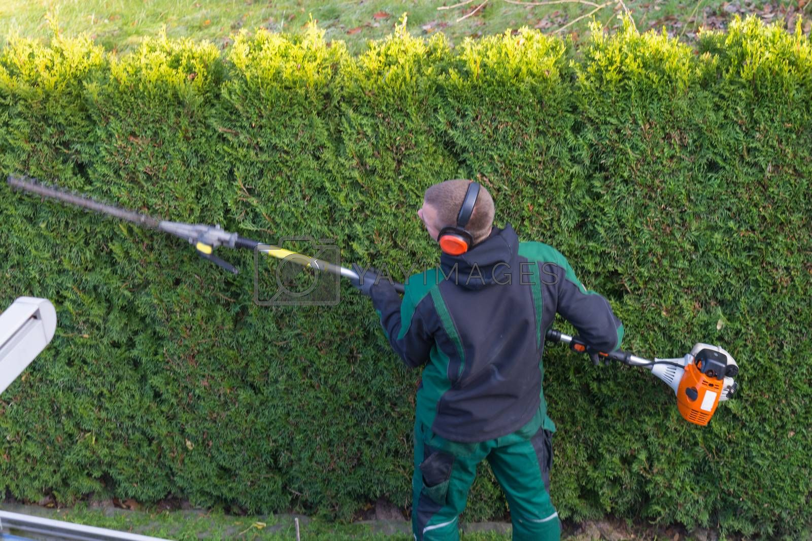 Gardener cuts a hedge  by JFsPic