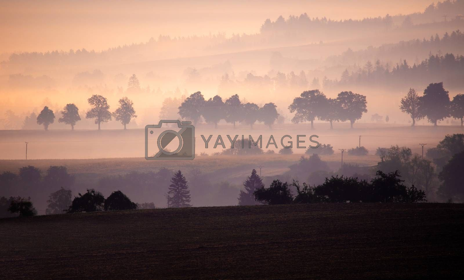 Misty and Foggy landscape with a tree silhouette on a fog at sunrise, Czech Republic
