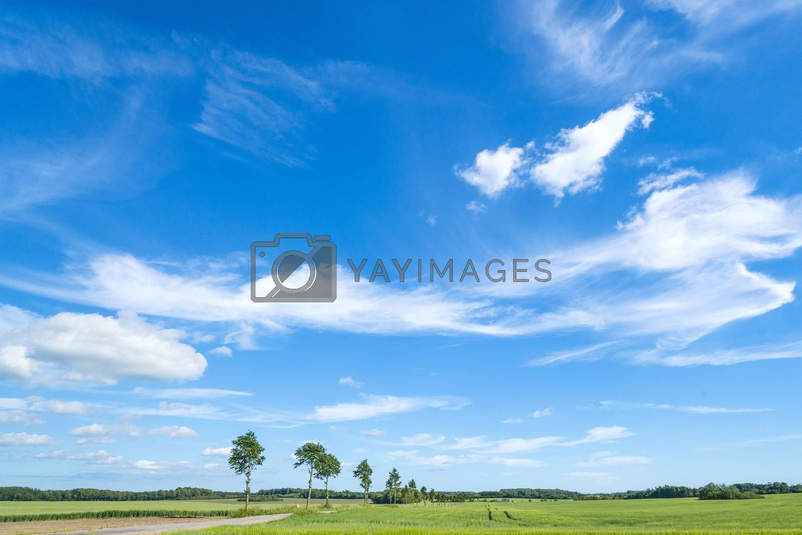 Landscape in the summer with white clouds in the blue sky over green fields