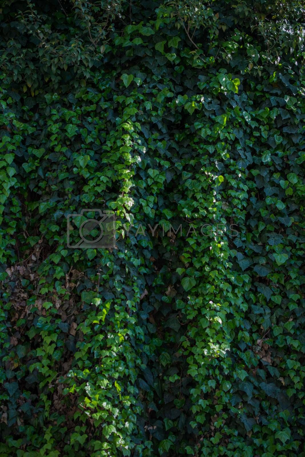 Green leaves of the spring as a background by berkay