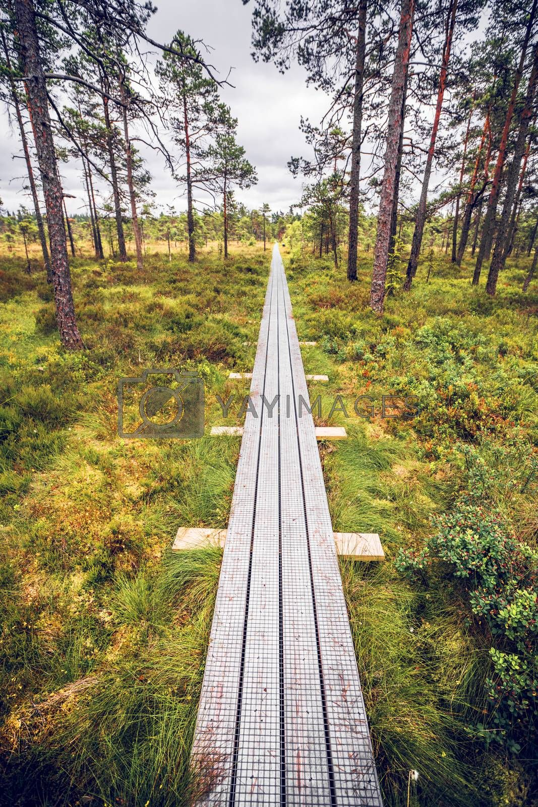 Trail of planks in a Scandinavian forest in the summer