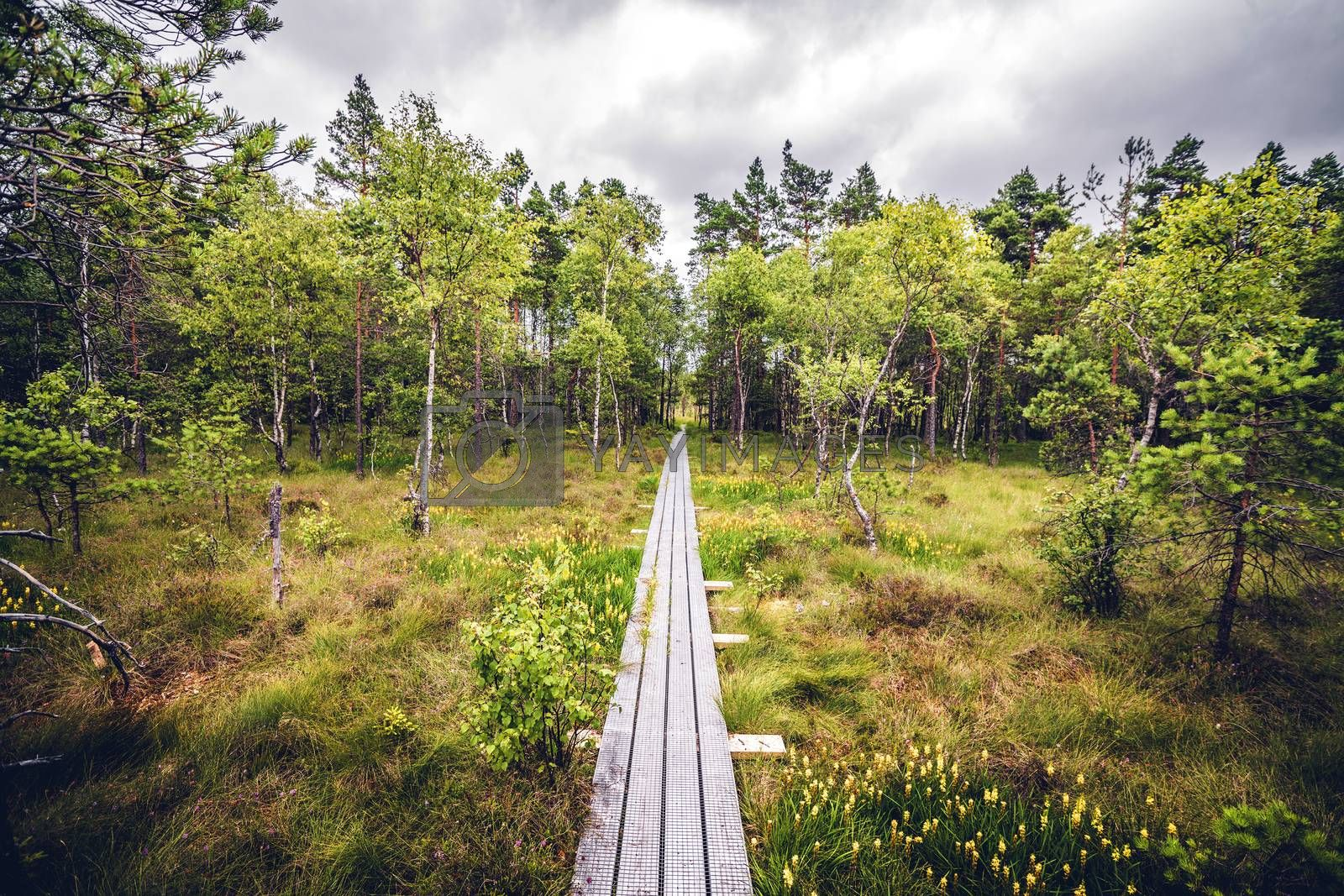 Wooden nature trail made of planks in a forest landscape with trees and grass