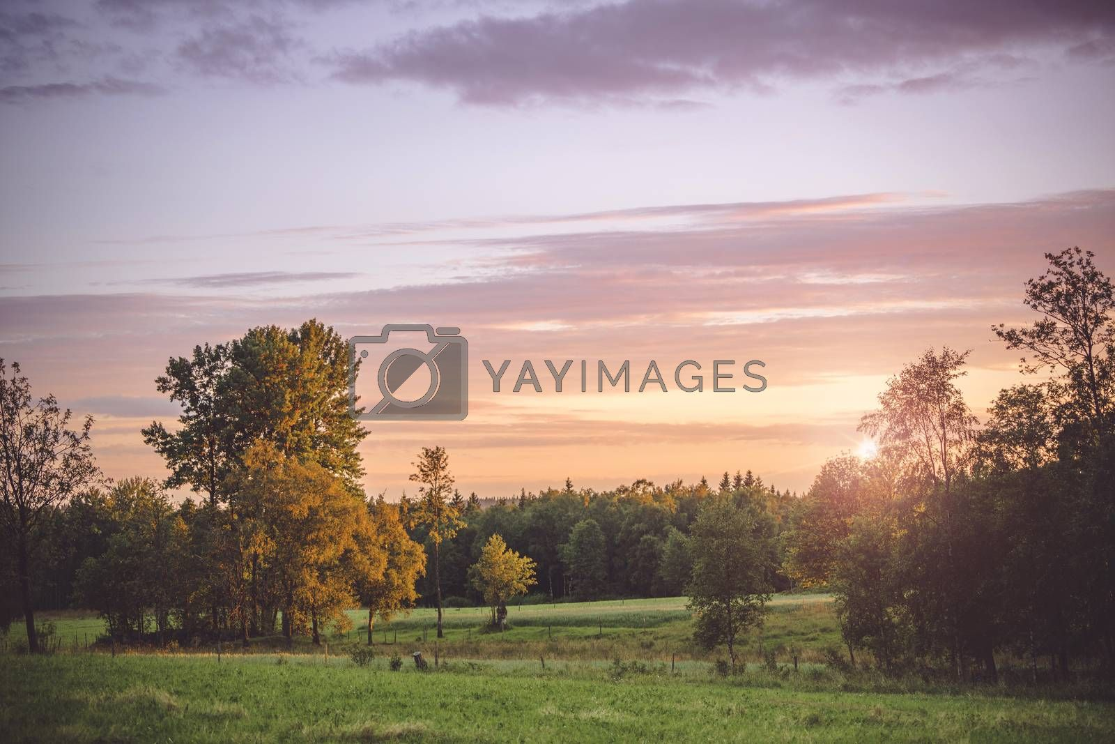 Sunset in a countryside landscape with trees and meadows with a violet light in the sky