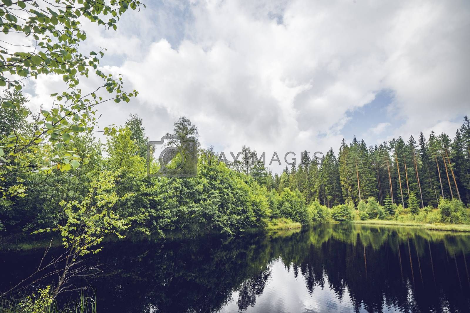 Dark lake in a forest with green trees reflecting in the water in the summer