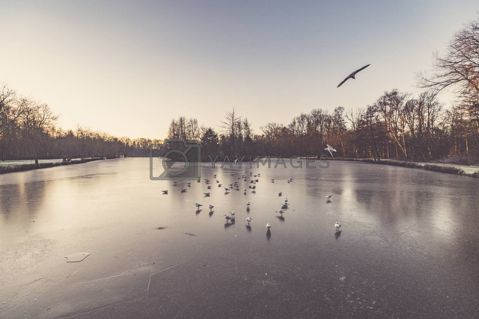 Winter landscape with a beautiful sunrise over a frozen lake with gulls